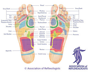 Reflexology and Massage. Foot Map